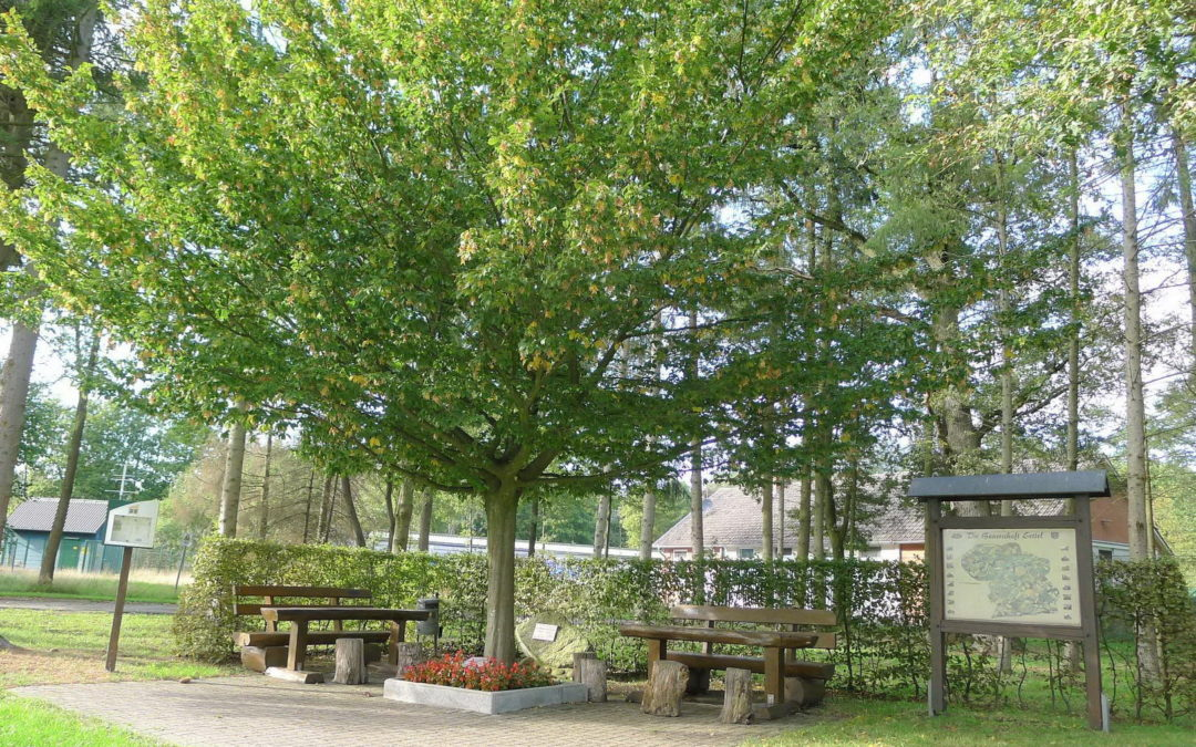 Setteler Milleniumbaum seit 20 Jahren im Mittelpunkt der Bauerschaft